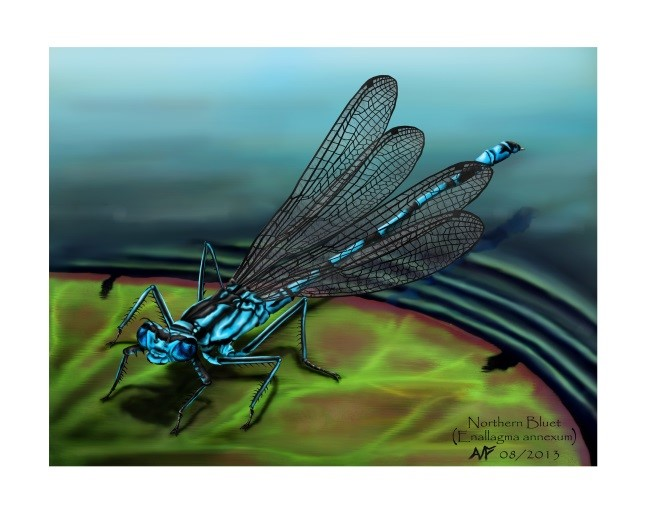 nw_wisconsin_-media_type-of-media-_-Damselfly_-Adam-frankiewicz_arts_in_hand