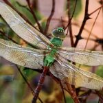 Dragon Fly Photography Arts in Hand Gallery Spooner Wisconsin